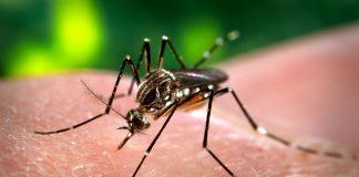 dengue,Aedes Aegypty, alerta,